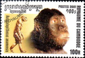 australopitheque-anamensis325