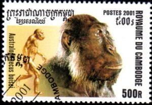 australopitheque-boiseisc322