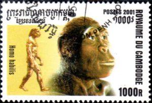 homo-habilis-cambodge326