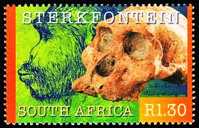 homo-habilis-sterkfontein