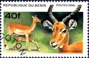 L'attribut alt de cette image est vide, son nom de fichier est Impala-bénin.png.